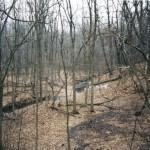 forest-fall2.jpg