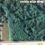 house-forest.jpg
